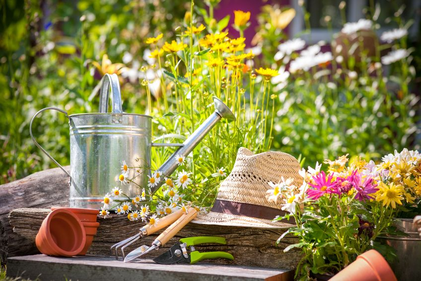 Un arrosoir dans un jardin