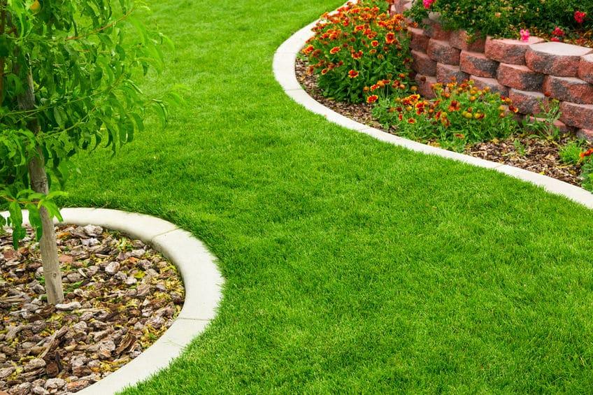 Une allée de pelouse