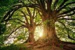 DIY : mastic cicatrisant pour arbre fait maison