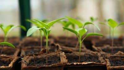 Jardinage écologique: avantages et conseils