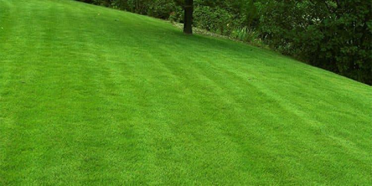 différence entre gazon et pelouse
