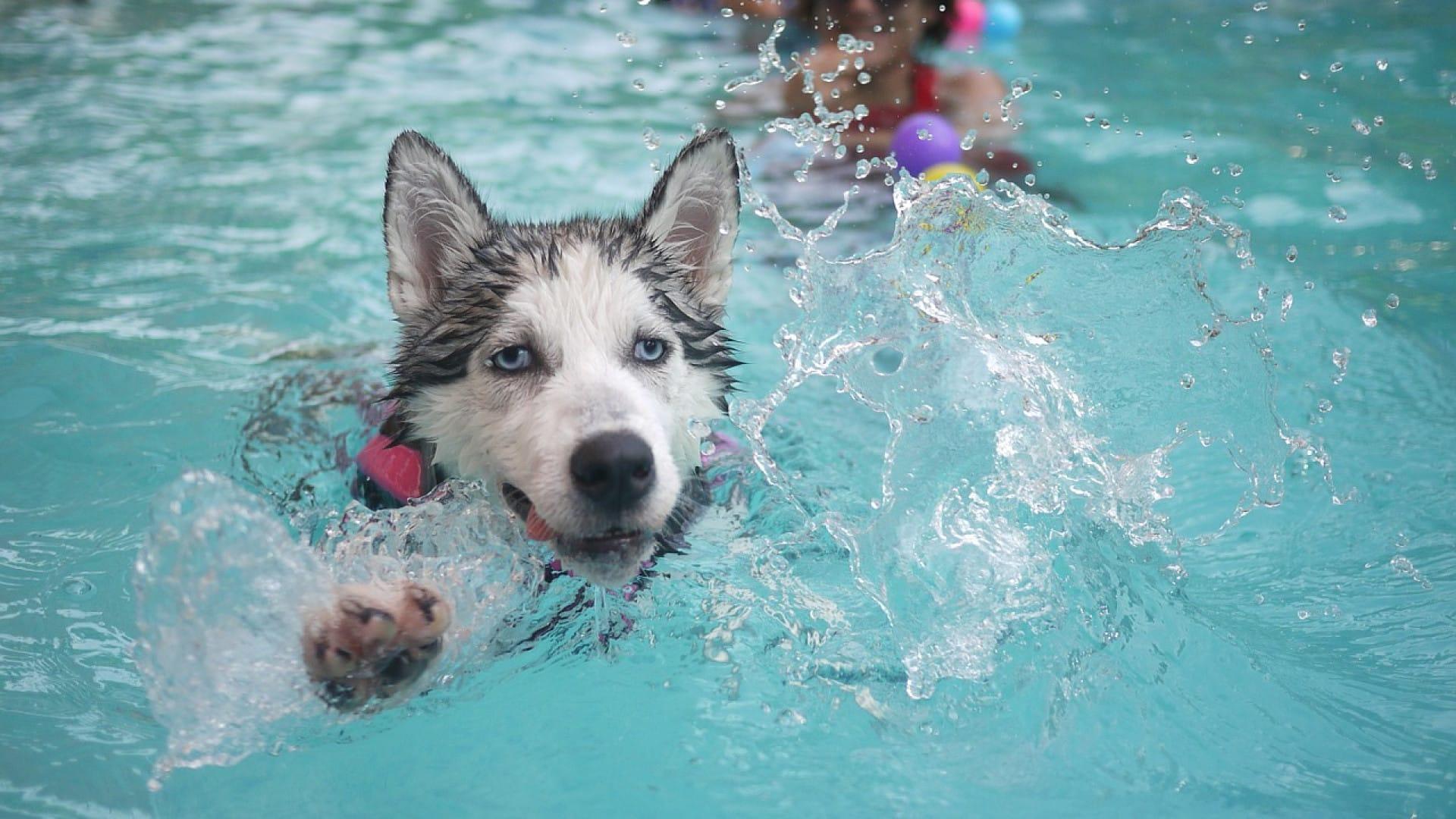 Pourquoi installer une piscine pour chien dans votre jardin ?